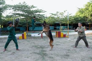 Top 5 giống chó trông nhà được nuôi nhiều nhất